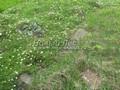 Альпийская лужайка - имитация растительного сообщества альпийского высокогорья