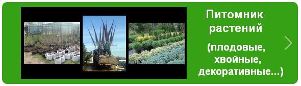 Питомник растений «Сады Ясногорья» (Тульская область, Ясногорский район)