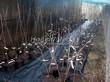 Саженцы яблони различных сортов в контенерах (весной в питомнике)