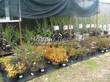 Саженцы плодовых и декоративных кустарников в контейнерах (питомник, весна)