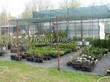 Саженцы хвойных декоративных растений (деревьев и кустарников) в контейнерах - весна, питомник Сады Ясногорья