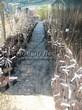 Саженцы яблони и сливы весной в питомнике Сады Ясногорья (Тульская область)