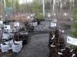 Саженцы деревьев в контейнерах в питомнике весной: черешня, вишня, абрикосы