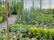 Контейнерные саженцы декоративных растений - можжевельник, туя, ель - лето в питомнике Сады Ясногорья (Тульская область)