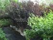 Пузыреплодник калинолистный летом - контейнерные кустарники в питомнике Сады Ясногорья (Тульская область, Ясногорский район)
