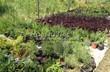 Контейнерные саженцы лиственных и хвойных растений - лето, питомник Сады Ясногорья (Тульская область, Ясногорский район)