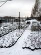 Саженцы растений в питомнике зимой под снегом