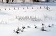 Саженцы хвойных растений зимуют под сугробами в питомнке в Тульской области