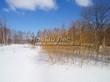 Саженцы лиственных деревьев зимуют в питомнике Сады Ясногорья (Тульская область, Ясногорский район)