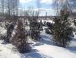 Многолетние саженцы хвойных деревьев зимуют очередную зиму под снегом в питомнике ожидая будущих хозяев