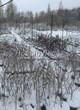 Саженцы растений (хвойных и лиственных) зимой в питомнике под снегом