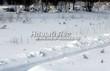 Саженцы зимой в питомнике надёжно укрыты глубокими сугробами