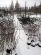 Зима в питомнике в тульской области: саженцы различных растений укрыты снегом