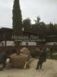 Перемещение крупномера Сосны на участке для посадки (осень, октябрь)
