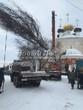 Разгрузка крупномера Дуба обыкновенного, привезенного на грузовике из питомника для посадки (зима, декабрь)