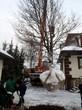 Установка крупномерного дерева Дуба обыкновенного в посадочную яму на участке при помощи крана - Посадка крупномеров (зима, февраль)