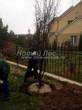 Посадка крупномеров лиственных деревьев из питомника (осень, октябрь)