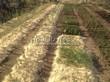 Посадка саженцев в грунт и в контейнеры - Пикировка декоративных растений в питомнике летом - 101