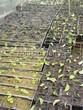 Посадка саженцев в грунт и в контейнеры - Пикировка декоративных растений в питомнике летом - 102