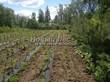 Посадка саженцев в грунт и в контейнеры - Пикировка декоративных растений в питомнике летом - 103