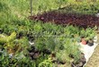 Посадка саженцев в грунт и в контейнеры - Пикировка декоративных растений в питомнике летом - 108