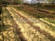 Посадка саженцев в грунт и в контейнеры - Пикировка декоративных растений в питомнике летом - 111