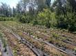 Посадка саженцев в грунт и в контейнеры - Пикировка декоративных растений в питомнике летом - 112