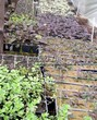 Посадка саженцев в грунт и в контейнеры - Пикировка декоративных растений в питомнике летом - 119