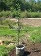 Саженцы и плодовые крупномерные деревья Яблоня домашняя Мелба (Мельба)