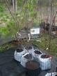 Саженцы и плодовые крупномерные деревья Абрикос Саровский
