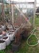 Саженцы и плодовые крупномерные деревья Вишня обыкновенная Жуковская