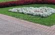 Садовая дорожка из тротуарной плитки (цветная бетонная: розовая, красноватая, кирпичного цвета) - 103