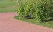 Садовая дорожка из тротуарной плитки (цветная бетонная: розовая, красноватая, кирпичного цвета) - 139