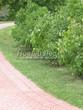 Садовая дорожка из тротуарной плитки (цветная бетонная: розовая, красноватая, кирпичного цвета) - 143