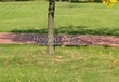 Садовая дорожка из тротуарной плитки (цветная бетонная: розовая, красноватая, кирпичного цвета) - 145