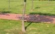 Садовая дорожка из тротуарной плитки (цветная бетонная: розовая, красноватая, кирпичного цвета) - 152