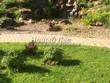 Садовая дорожка из бетона (темная серая тротуарная плитка) - 116