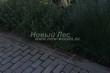 Садовая дорожка из бетона (темная серая тротуарная плитка) - 120