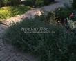 Садовая дорожка из бетона (темная серая тротуарная плитка) - 133