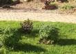 Садовая дорожка из бетона (темная серая тротуарная плитка) - 137