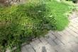 Садовая дорожка из бетона (темная серая тротуарная плитка) - 140