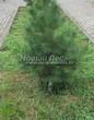 Садовая дорожка из бетона (темная серая тротуарная плитка) - 149