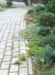 Бетонная садовая дорожка (светлая тротуарная плитка, брусчатка) - 108