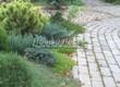 Бетонная садовая дорожка (светлая тротуарная плитка, брусчатка) - 117