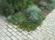 Бетонная садовая дорожка (светлая тротуарная плитка, брусчатка) - 123