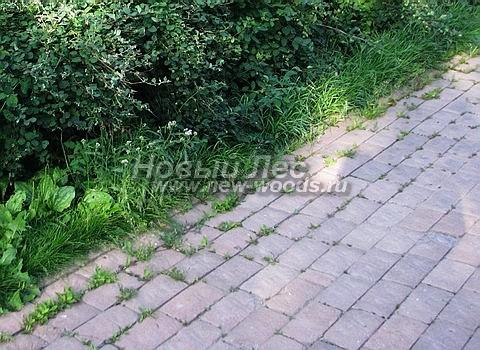 Периодически при уходе за садовыми дорожками из брусчатки требуется удаление растений-сорняков