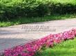 Садовая дорожка из бручатки (бетон, отлив под старину) - 105