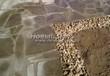 Садовая дорожка из плитняка (швы заделаны цементом) - 136