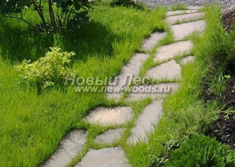 Узкая садовая дорожка из плитняка с травой в швах, уложенная для прохода одного человека