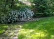 Садовая дорожка из плитняка (камень-пластушка, швы с травой) - 117